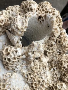 coral cored